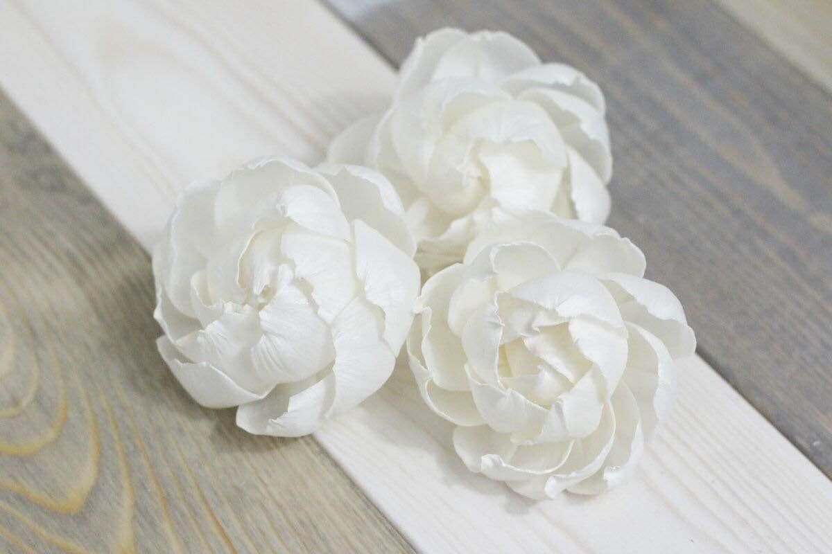 Peony/Cabbage Rose